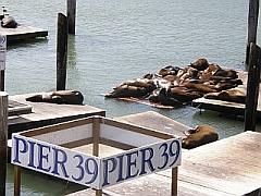 Pier 39 met op de achtergrond de zeeleeuwen